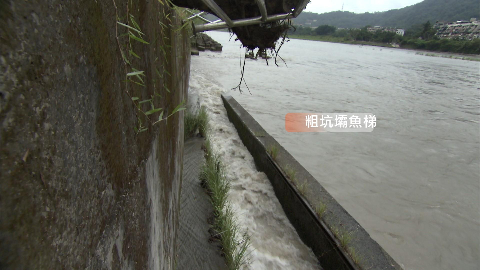 小粗坑電廠:壩的左岸設有階梯水池式魚梯一座