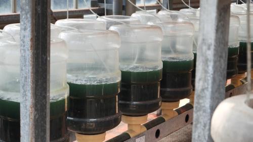 林口電廠:微藻光合反應除碳模組