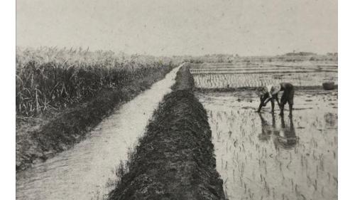 鳥山頭水庫>早期嘉南平原(北港郡)水稻栽種:早期的嘉南平原為一看天田灌溉水源不足,僅有局部性的引水灌溉設施,缺乏全面性的灌溉系統。