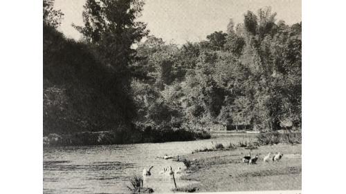 鳥山頭水庫:烏山嶺隧道出口(俗稱西口)至鐘口型廣頂堰沿途段風景