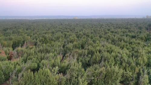 台中港北堤北側的防風林:自1975年起,至1994年,全部種植面積達500公頃。