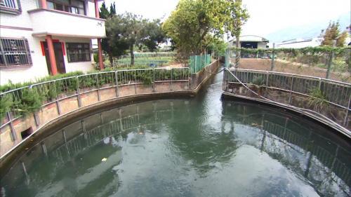 白冷圳圓堀分水池