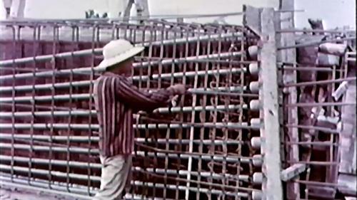 榮工處專業化的橋樑工程隊橋樑施工中-組立鋼鍵及鋼筋