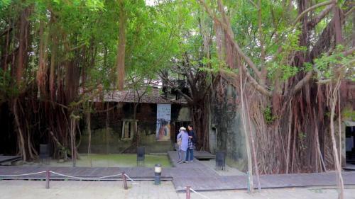 安平港:安平古堡樹屋