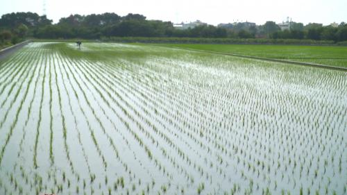 莿仔埤圳成為台灣第一條官設埤圳,也是南彰化的主要灌溉系統;溪州鄉位於彰化縣南端,多數居民務農維生,對莿仔埤圳的農業用水十分依賴。