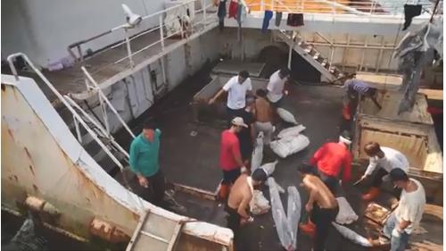 高雄港:前鎮漁港漁民處理捕獲之漁